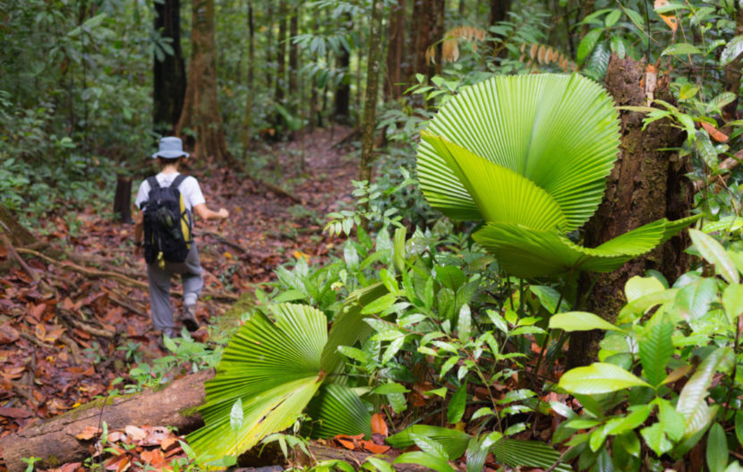 Hutan Klimantan
